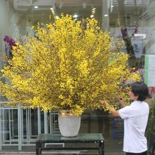 Cách chọn hoa ngày Tết Nguyên Đán