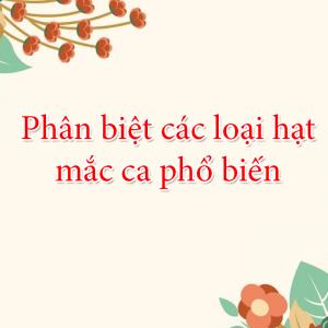 Hạt mắc ca Trung quốc khác các loại mắc ca Việt Nam điểm nào| Cách phân biệt các loại hạt mắc ca phổ biến hiện nay