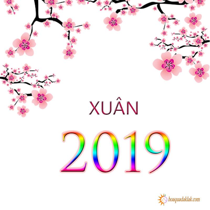 Banner xuân 2019