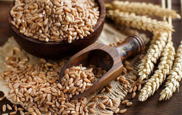Lúa mì, lúa gạo