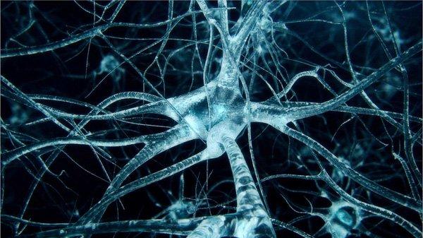 thần kinh